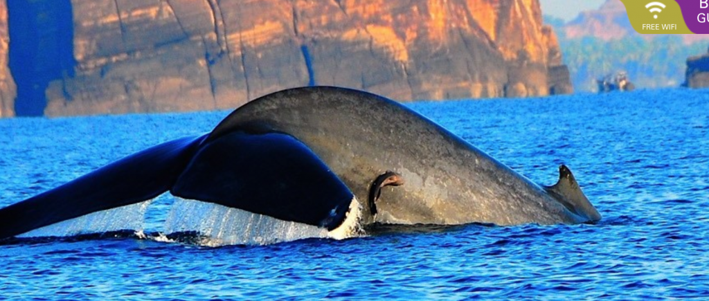 Whale watching in Trincomalee, Sri Lanka. Picture courtesy: Cinnamon Nature Trails